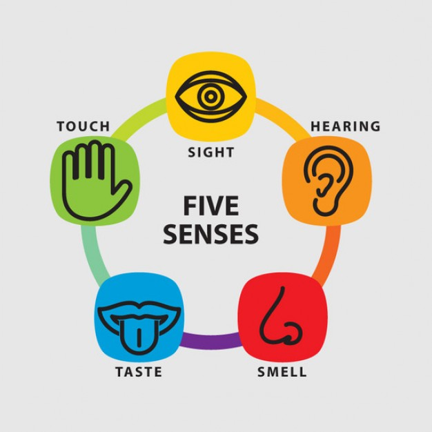 5 senses 5 senses preschool craft five senses craft find this pin and more on letter p by mary ann michlanski 5 senses of mr potato head i picked this activity to help express the 5 senses.